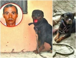Dog Kills Owner, Feasts On His Body As Helpless Police Watch In Horror (Disturbing Photos)